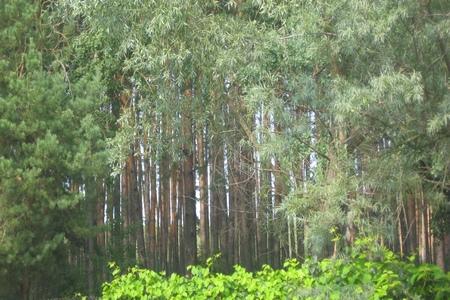 Лес=фото